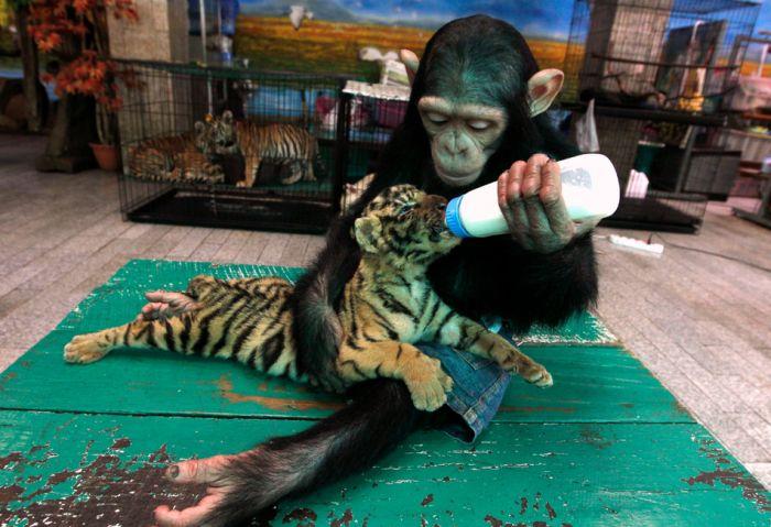 Лучшие фотографии животных за 2011 год