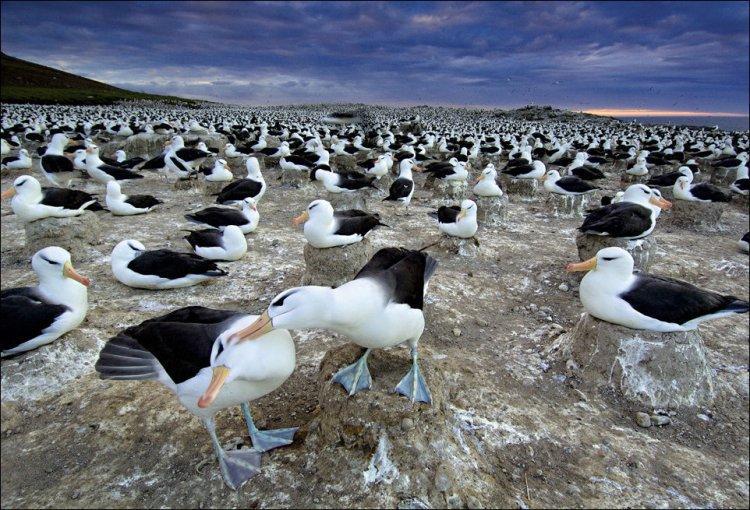 После зимовки, не далеко от Фолклендских островов в Южной