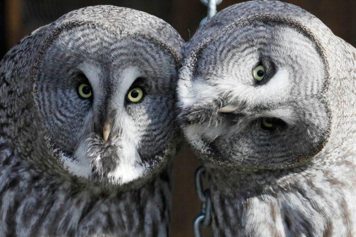 Лучшие фотографии животных за 2011 год. Продолжение