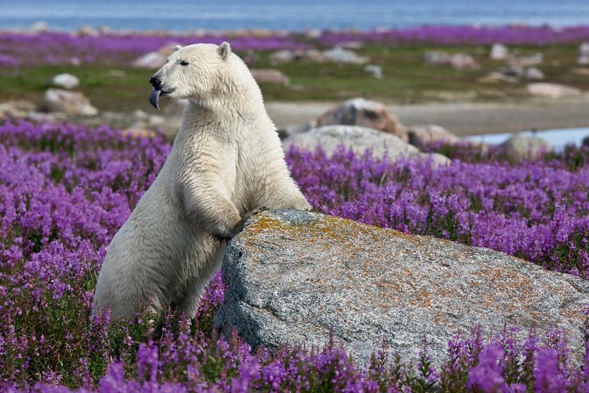 Животный мир Антарктики и Арктики