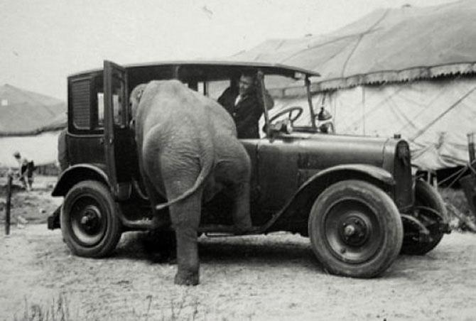 Ретро-фото слонов