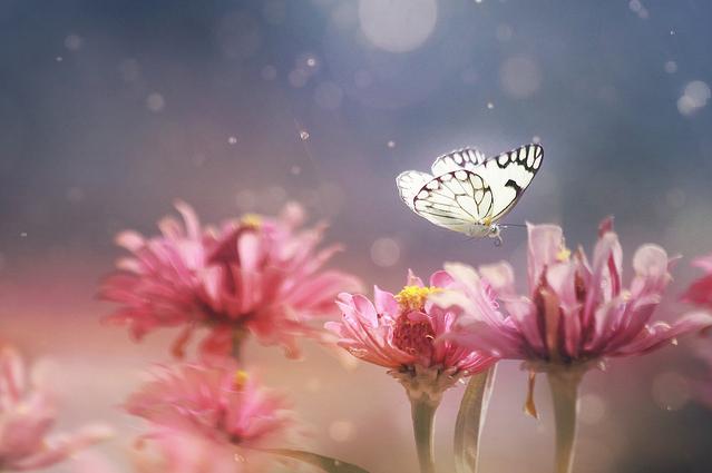 Удивительные насекомые от Pei Ling