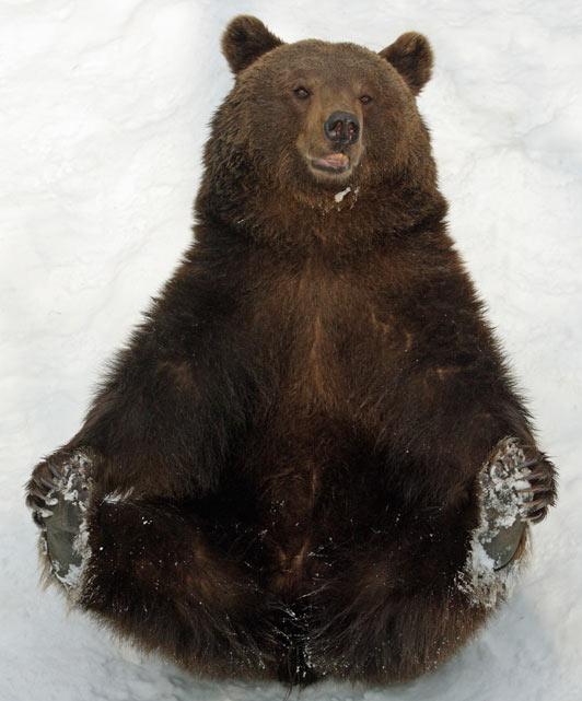 Медведи катаются с горы