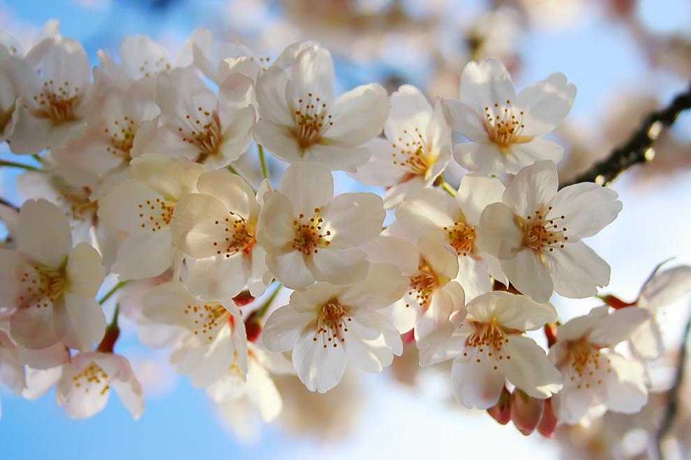 Наступление весны в разных уголках планеты