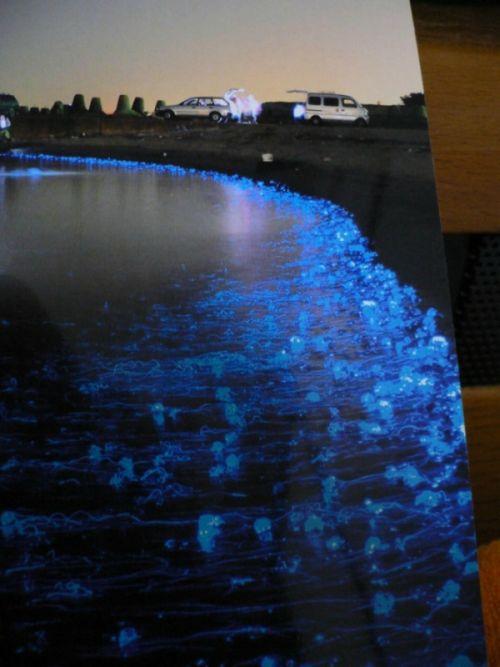 Медузы в Японии