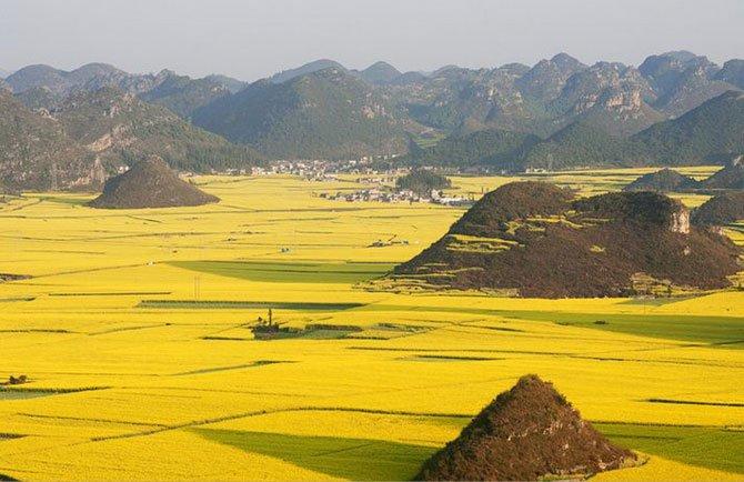 Цветение рапса в Китае