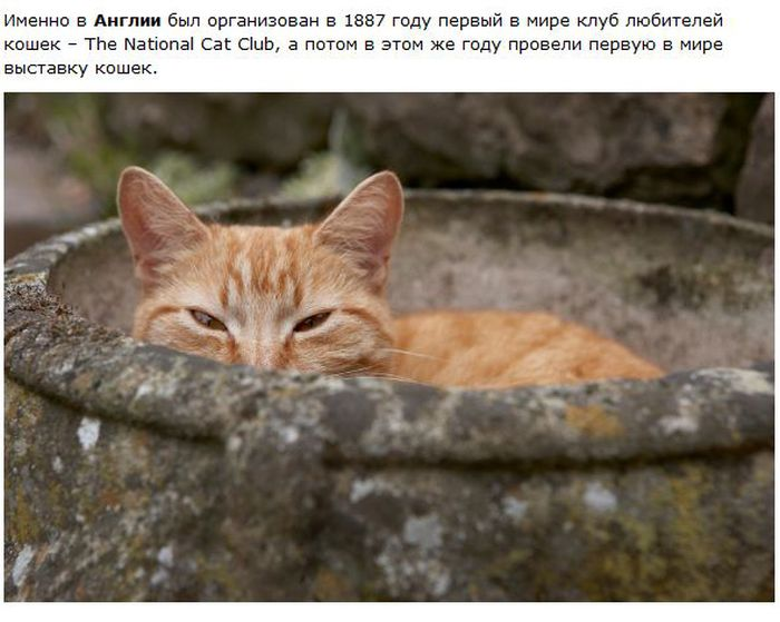 Interesting facts about cats behavior