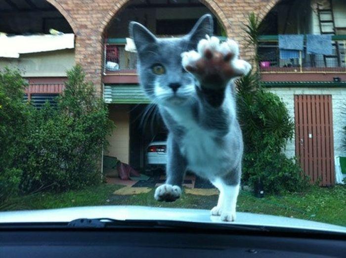 Фото котов в нужный момент