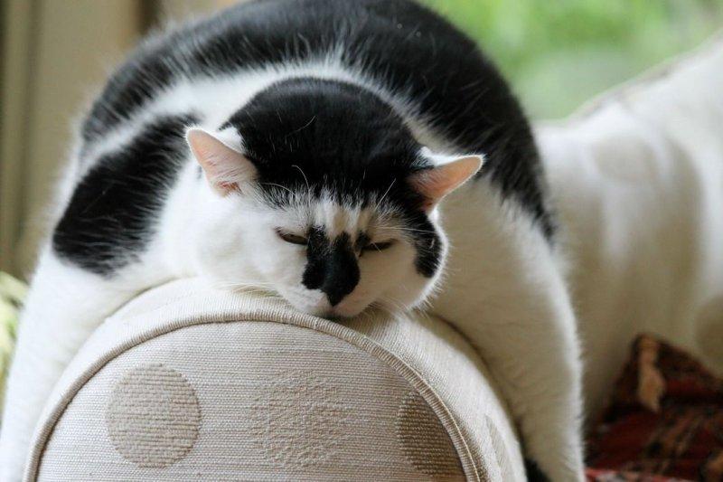 Лисой котом, утро приколы картинки фото