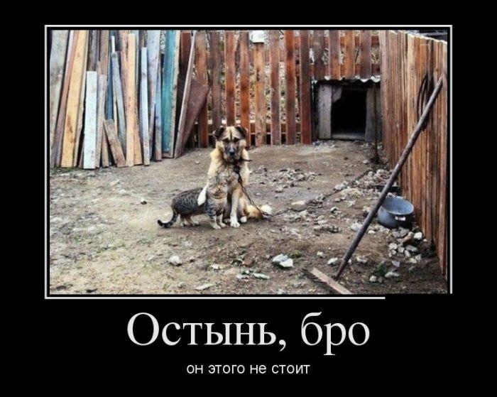 1345736966_demotivatoy_20.jpg