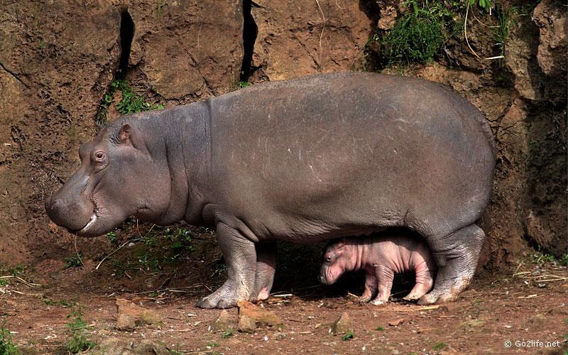 Уникальные фото животных