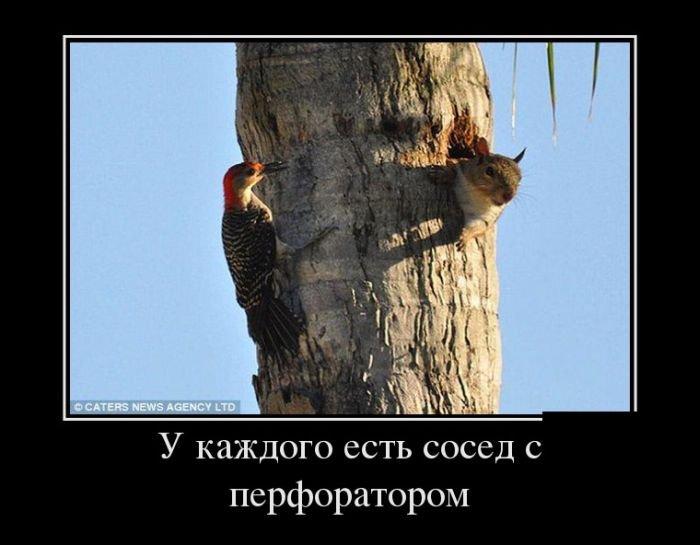 Юморъ 1372865602_demotivatory_01
