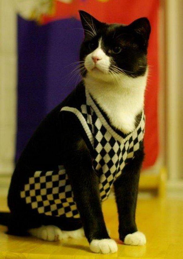 вечернего фото кошек в одежде или зарегистрироваться