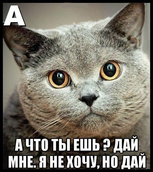 Алфавит по-кошачьи