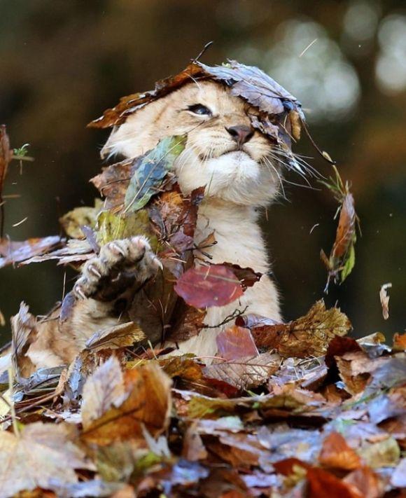 Днем рождения, октябрь смешные картинки