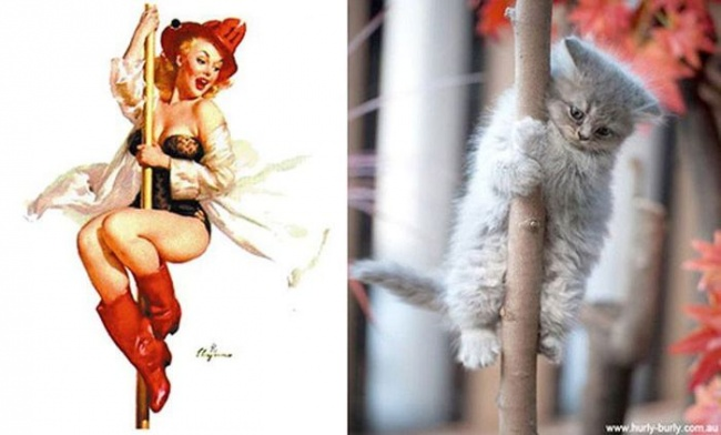 Арт-проект «Cats That Look Like Pin Up Girls»