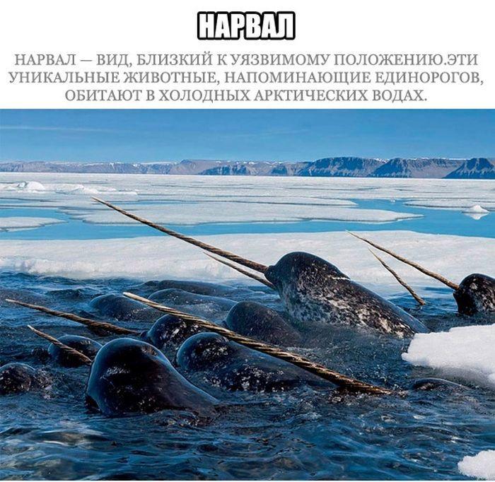 прикольные морские картинки: