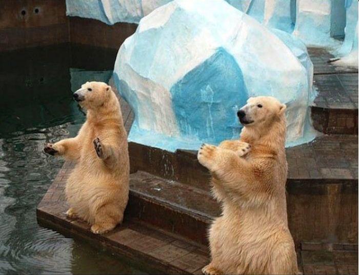 В Новосибирском зоопарке родился медвежонок
