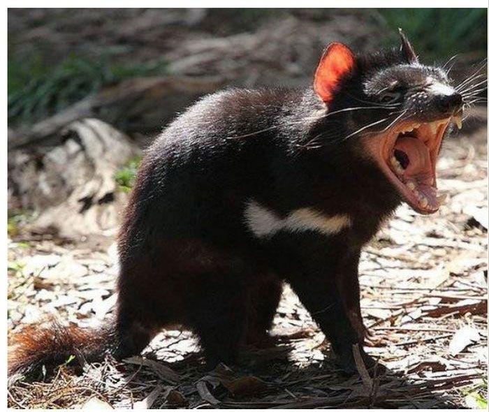 Топ-7 самых зловонных животных в мире