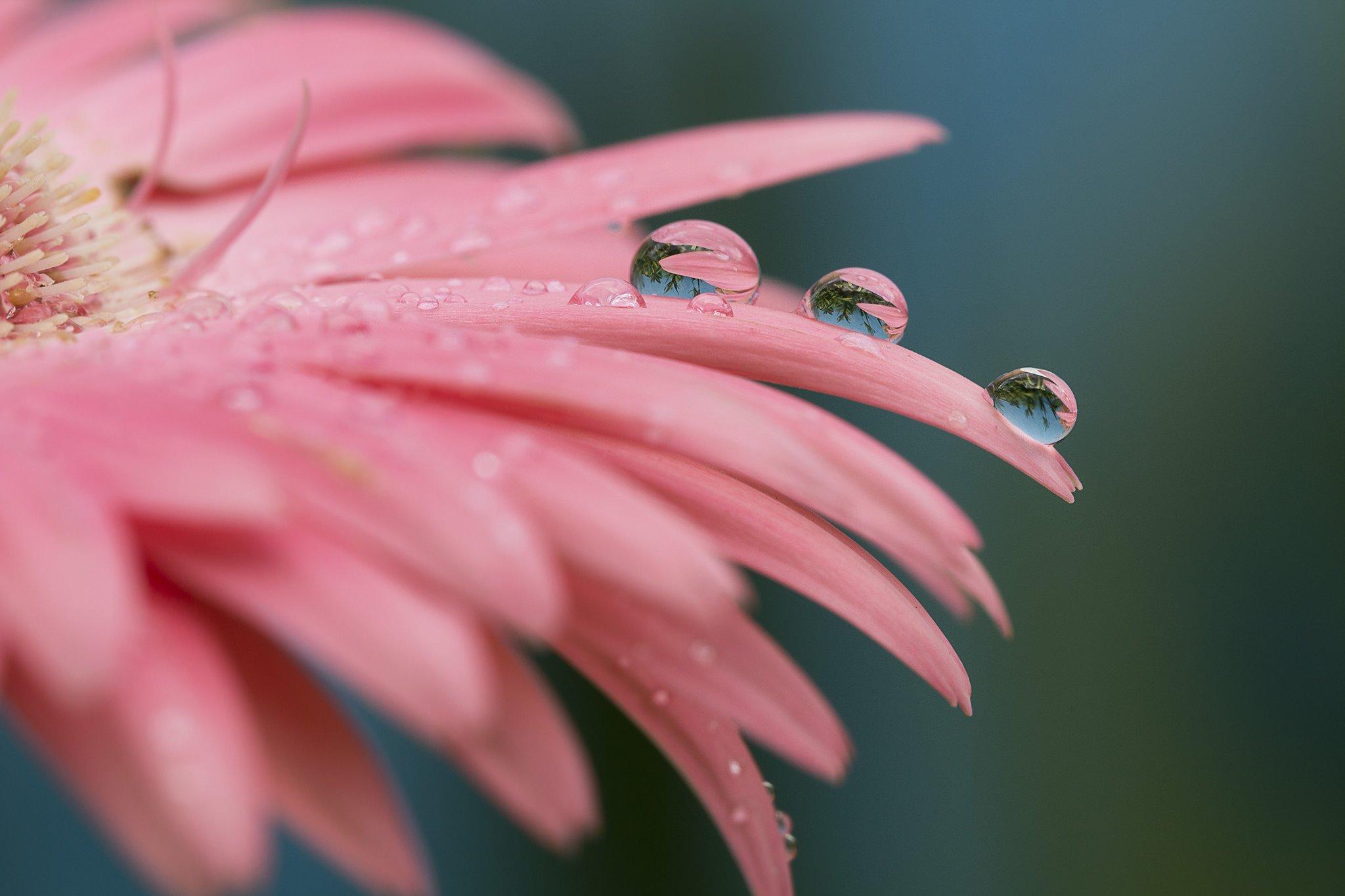 цветок капля макро скачать