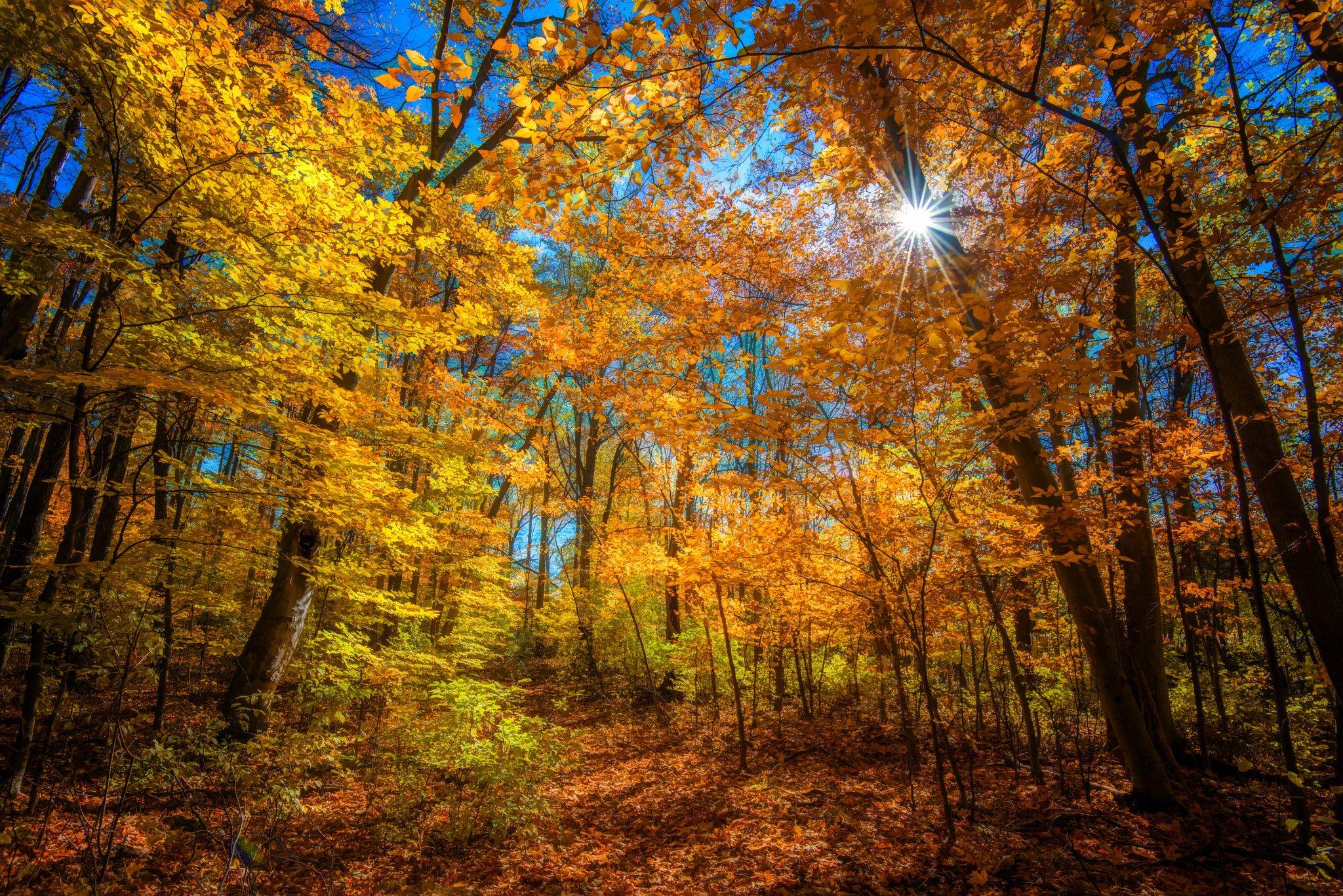 Осень лучи деревья бесплатно