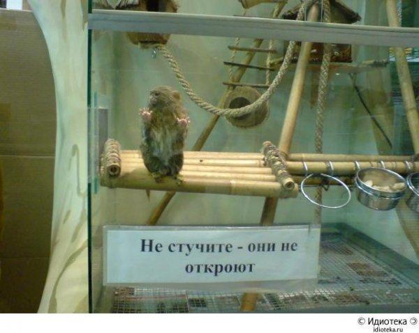 https://www.rulez-t.info/uploads/posts/2015-01/1422116236_prikoly-iz-rossii-9.jpg