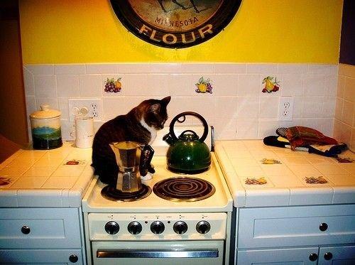 Ремонт кухни картинки прикольные