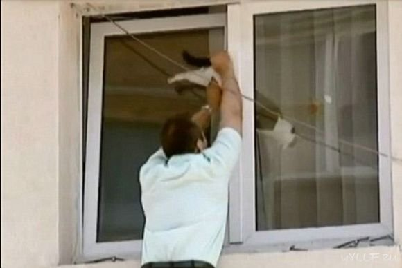 Опасности в доме. окна и балконы. все о кошках.