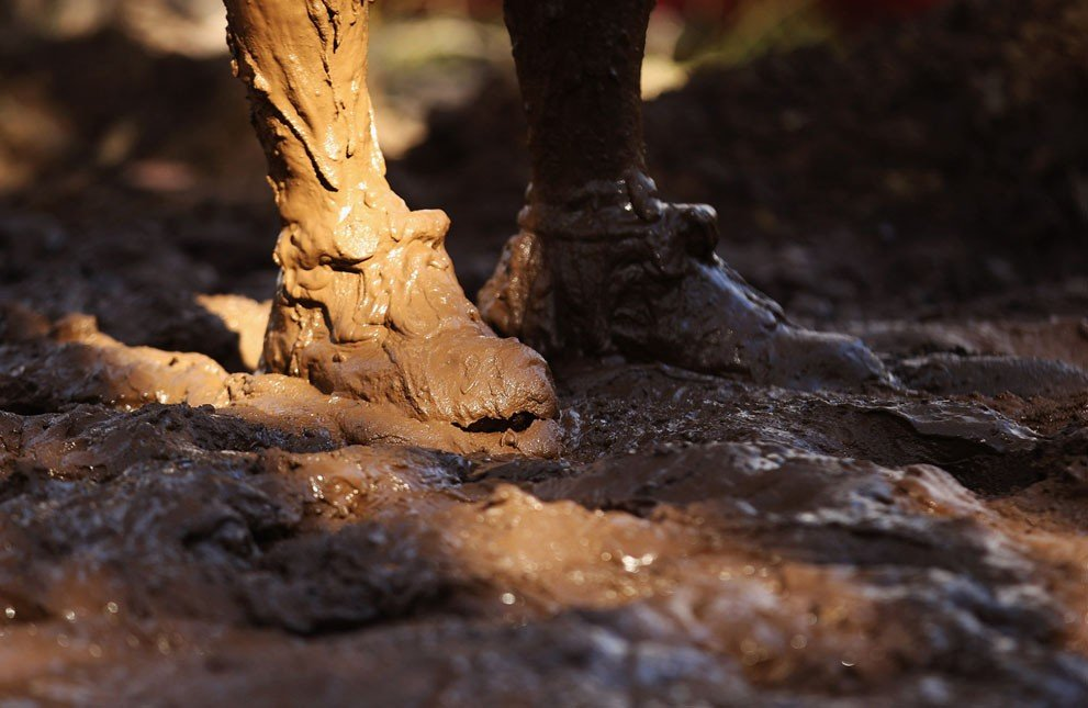 Ножки в грязи Вам