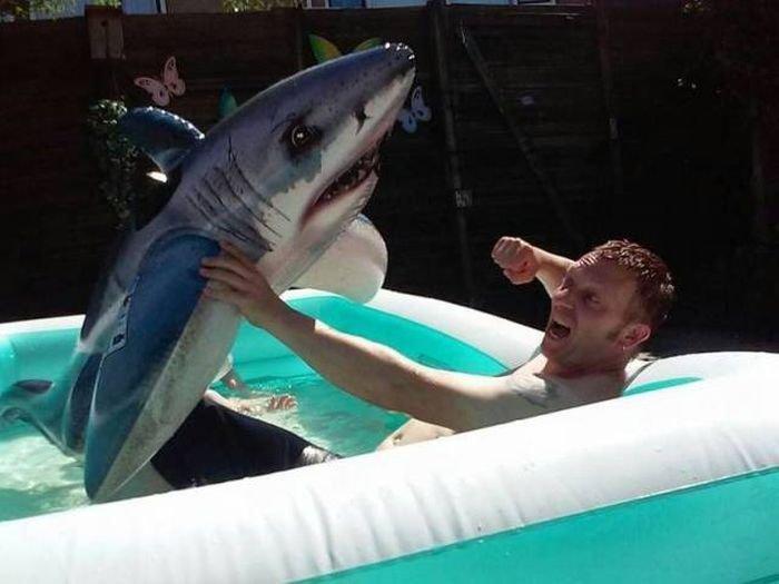 прикольные фото с акулами сети также появилось