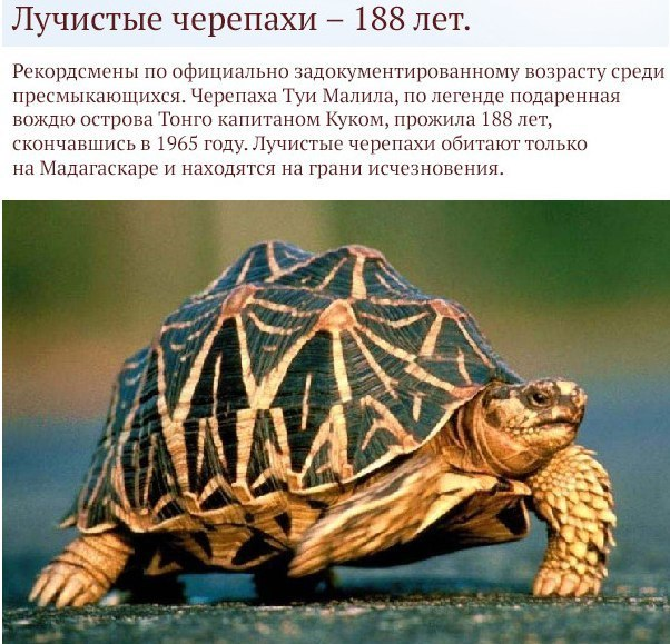 Самые долгоживущие существа планеты нашей