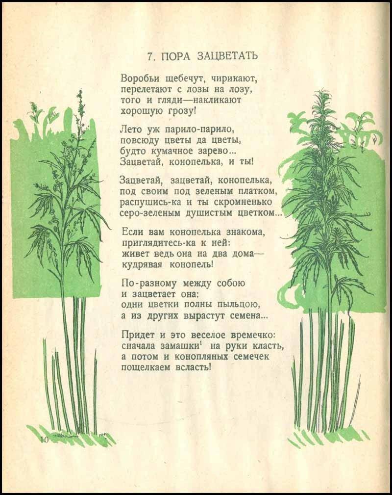 1478624192_sovetskaya-knizhka-pro-konoplyu-3.jpg