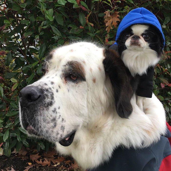 Собаки Друзья путешественники