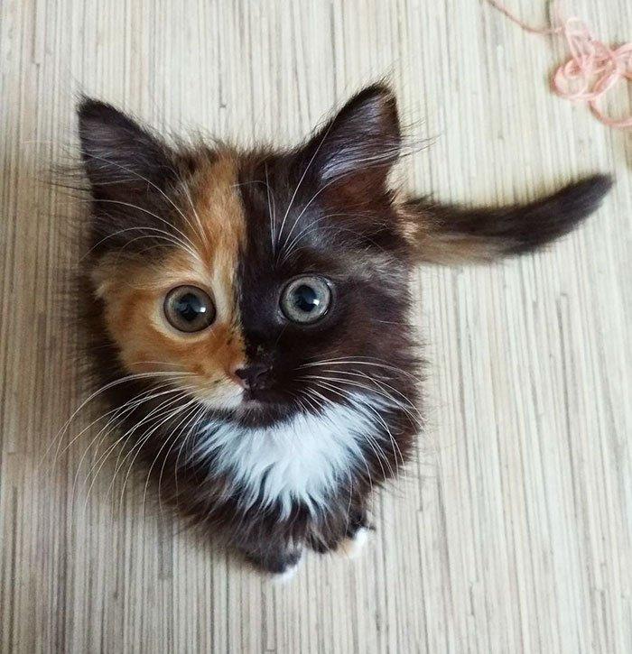 Двуликая кошка Яна