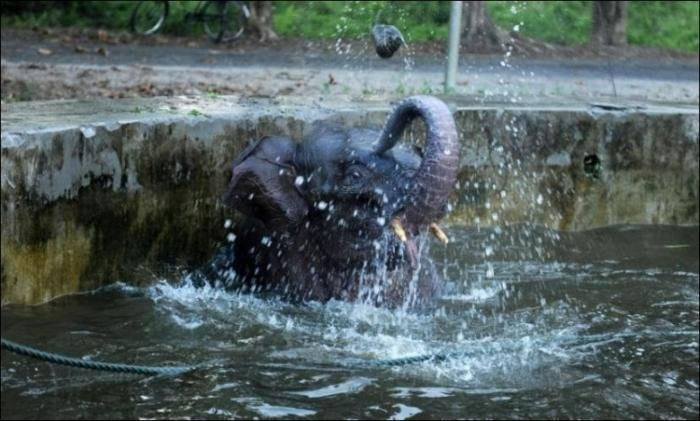 Слон упал в бассейн (6 фото)