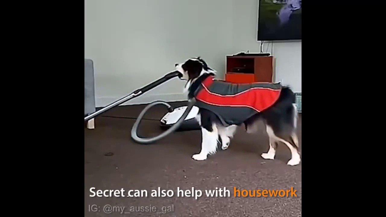 Ну очень умный пес