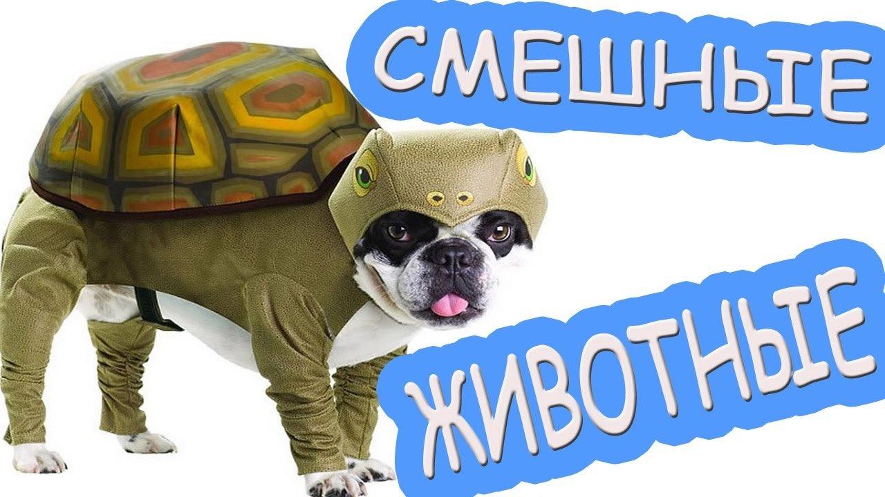Новые смешные видео про животных
