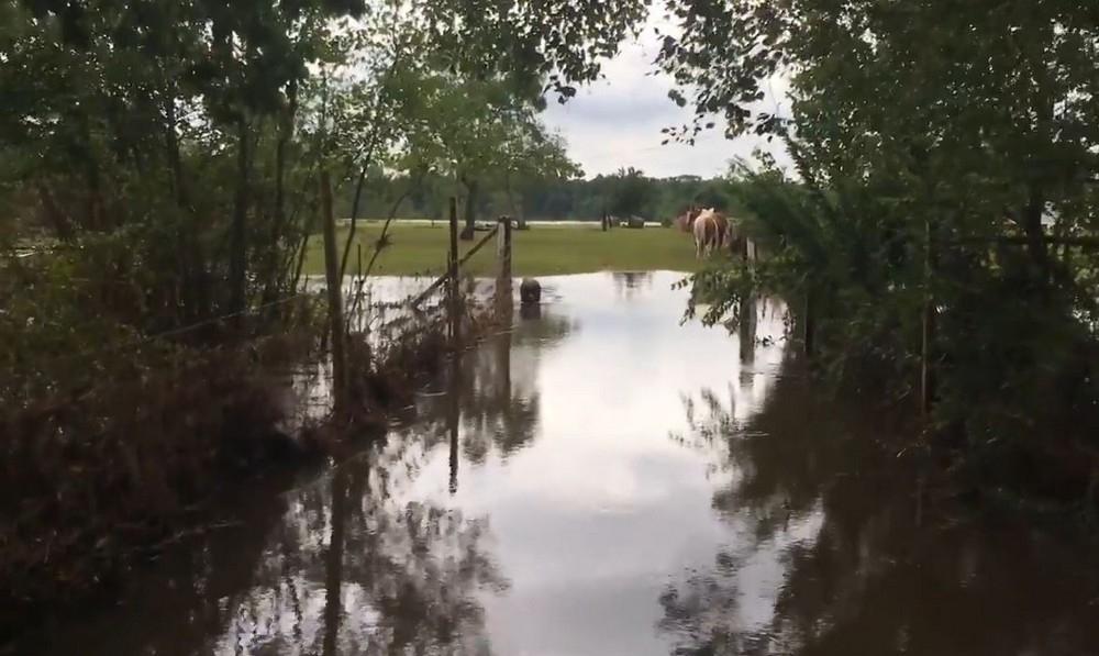 Выжившие звери: Трогательная встреча фермера с уцелевшими после урагана животными