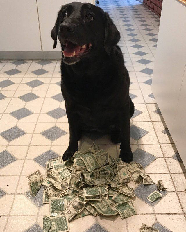 Собака сама себе покупает у хозяев лакомства за наличные