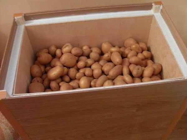 Картошка. Как сохранить картошку и как собирают с полей?