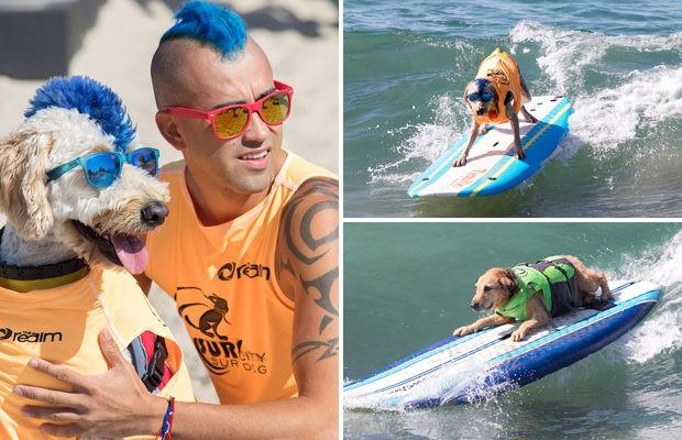 В Калифорнии прошло состязание собак-сёрферов