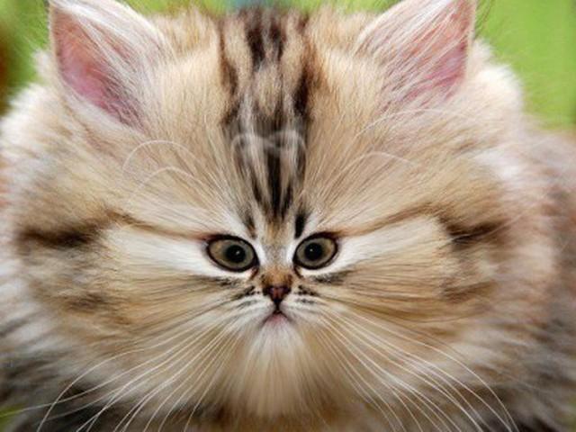 Приколы с котиками (16 фото)