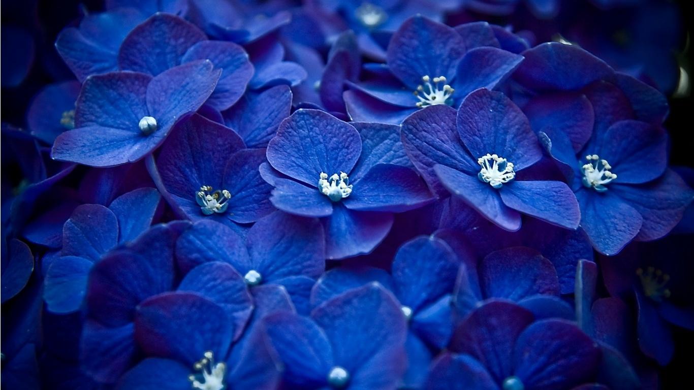 Подборка из синего цвета