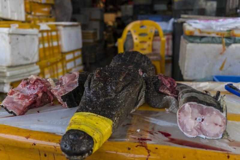 Рыбный рынок Цукидзи в Гуанчжоу, Китай - нарезка крокодилов. Не для слабонервных!