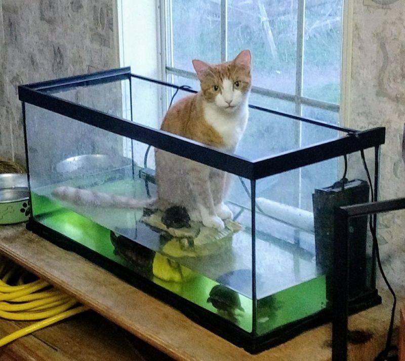 Кот и аквариум картинки с надписями