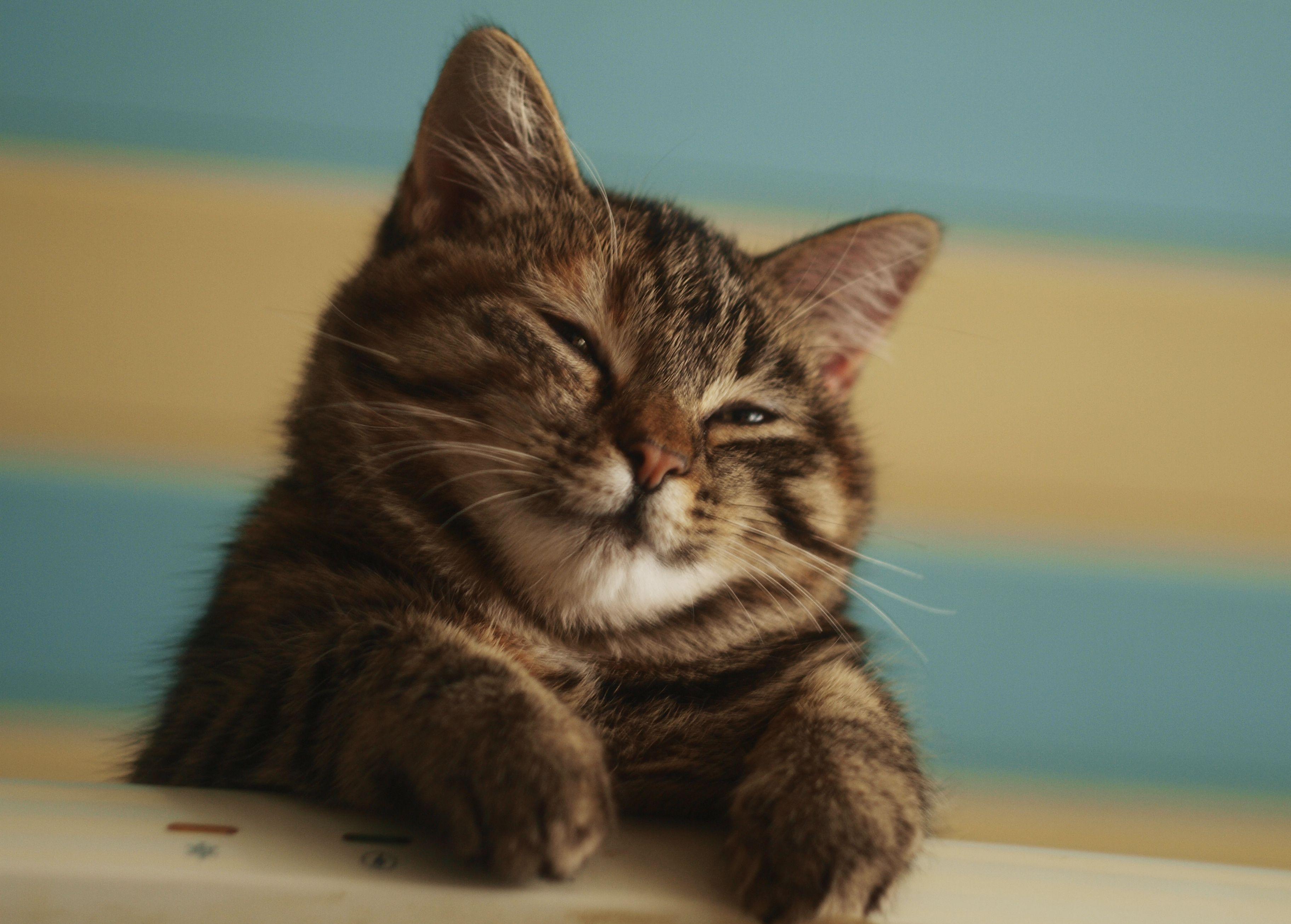 Картинки как дела кошки